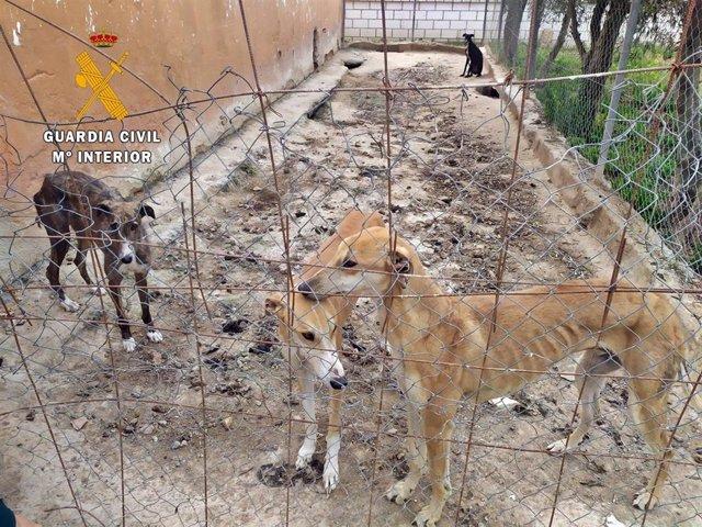 Perros desnutridos en Puebla de la Calzada