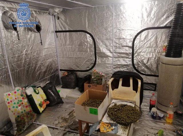 Un dels escorcolls de l'operació Dàtil de la Policia Nacional contra el tràfic de marihuana.