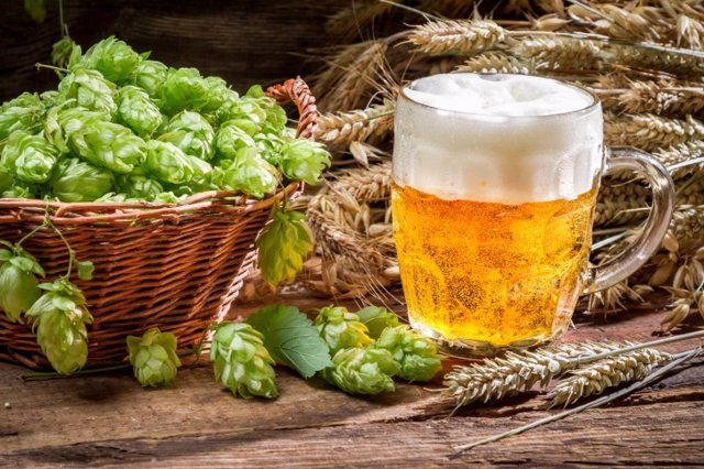 Archivo - Small beer with a large foam surrounded by hops