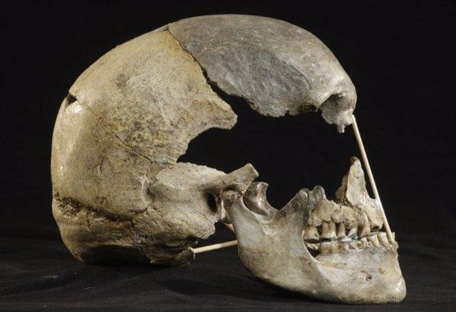 Vista lateral del cráneo casi completo de Zlaty kun