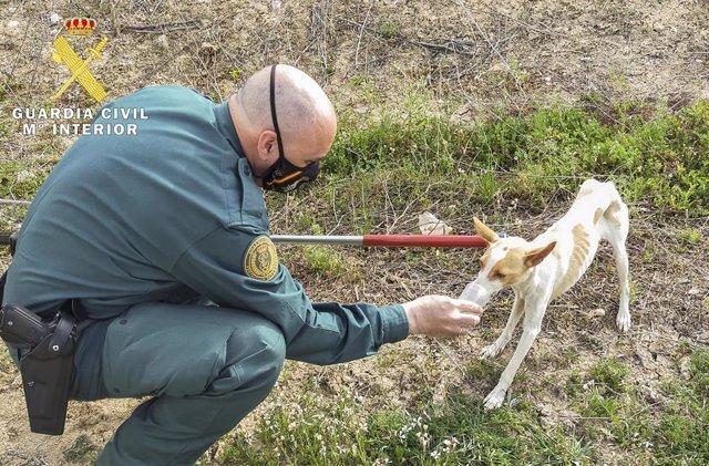Un guardia civil con un perro rescatado del interior de una balsa de riego