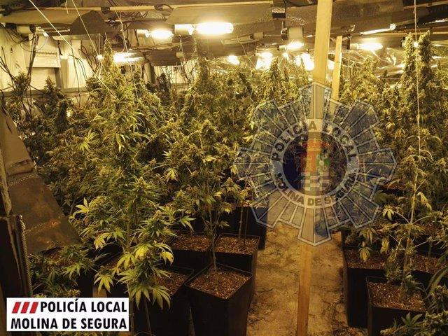 Imagen de la plantación de marihuana interceptada