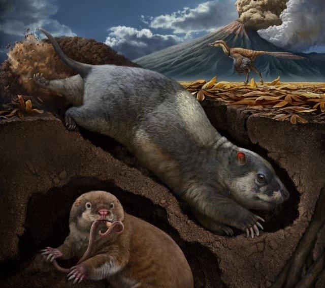 Este retrato muestra el tritilodonto Fossiomanus sinensis (arriba a la derecha) y el eutriconodontan Jueconodon cheni en madrigueras; ambos vivieron en la Biota Jehol del Cretácico Inferior (hace unos 120 millones de años), en el noreste de China