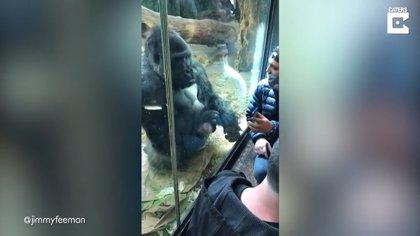 Este gorila ayuda a un hombre a pasar perfiles en una aplicación de citas