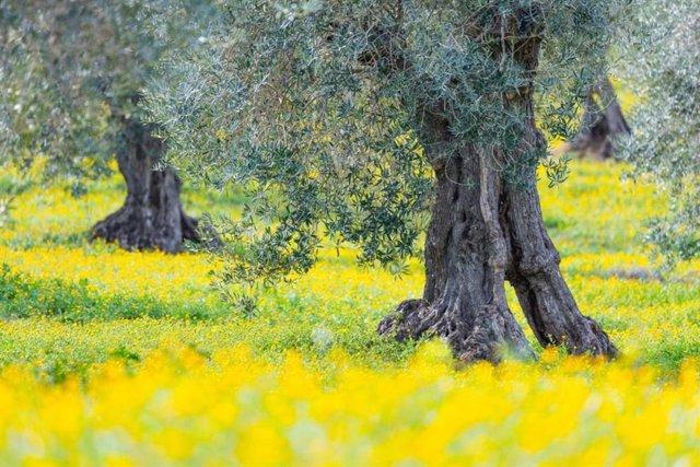 Bosque, primavera,