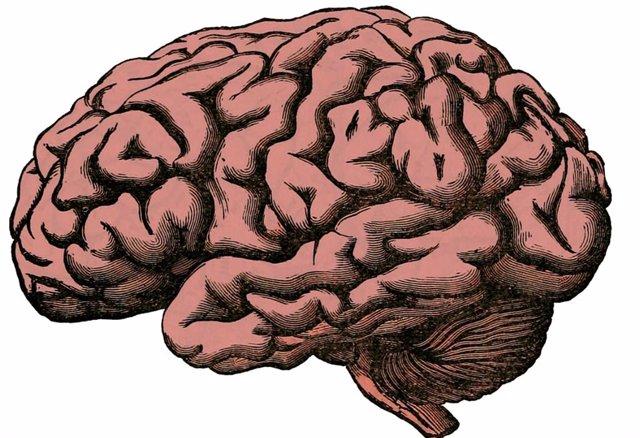 Archivo - Imagen de un cerebro