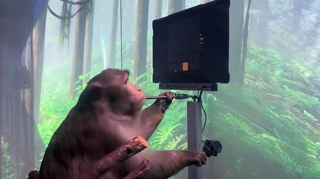 Macaco jugando al Pong con su mente
