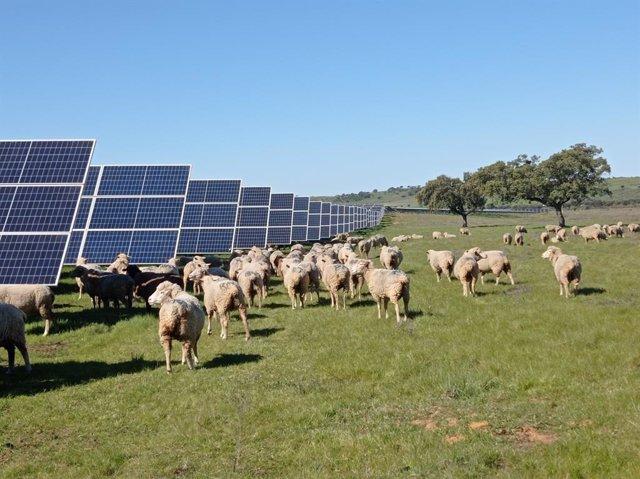 Endesa aplica el concepto Agrivoltaica a sus plantas renovables en Andalucía