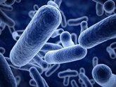 Foto: No sabes lo importante que son las bacterias para tu vida: todo lo que debes saber