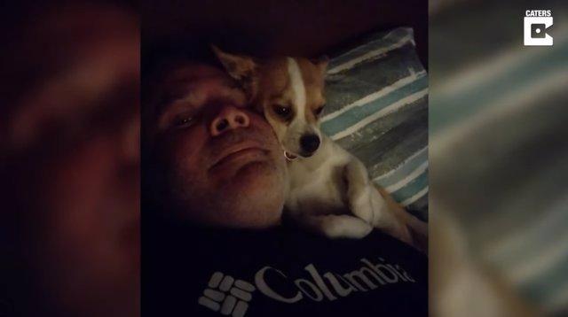 Charlie es un perro mezcla de Jack Russell y Chihuahua de dos años que sabe lo que quiere