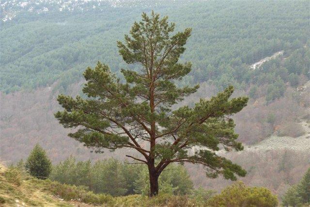 Los selvicultores piden que la Ley de Cambio Climático compense a los propietarios forestales por su contribución a absorber CO2.
