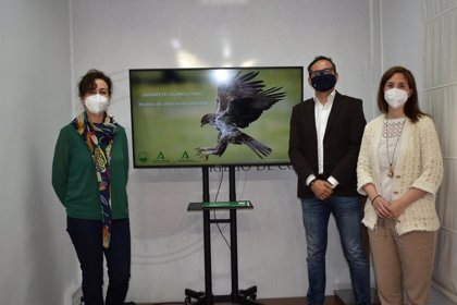 La Junta protege el hábitat del águila perdicera con las obras de la variante de Las Angosturas
