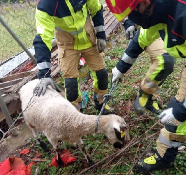 Rescate de la oveja.