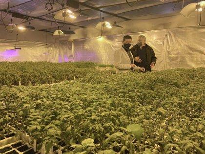 Torrelavega repartirá desde mañana unas 10.000 plantas de tomate de 350 variedades