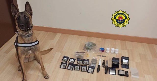 El gos Kata, ensinistrat per a la detecció de substàncies estupefaents