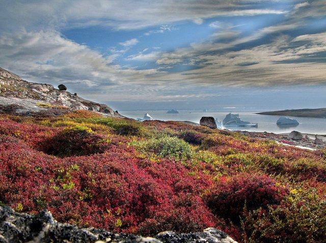 Tundra en Groenlandia