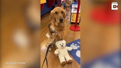 Este perro de servicio acude a una juguetería como recompensa por su labor
