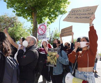 """ONG's critican a la Comunidad por """"ocultar información"""" sobre los animales del laboratorio Vivotecnia"""