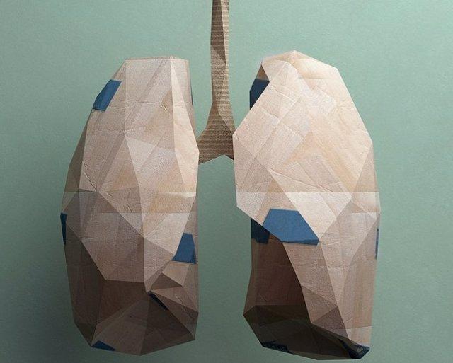 Archivo - Pulmones.