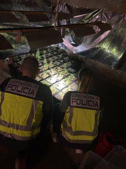 Policía Nacional detiene a cuatro personas por tráfico de drogas