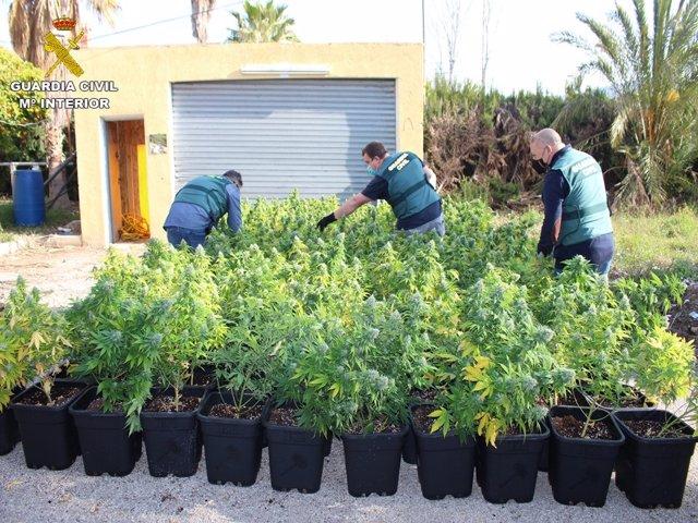 Varias de las plantas intervenidas en Novelda