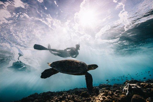 Proyectos marinos que impulsan la pesca sostenible
