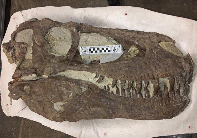 """Espécimen de """"Hollywood"""", la misma especie que Teratophoneus, descubierto aproximadamente a dos millas al norte de la """"Cantera de Arcoíris y Unicornios"""" en el Monumento Nacional Grand Staircase-Escalante."""