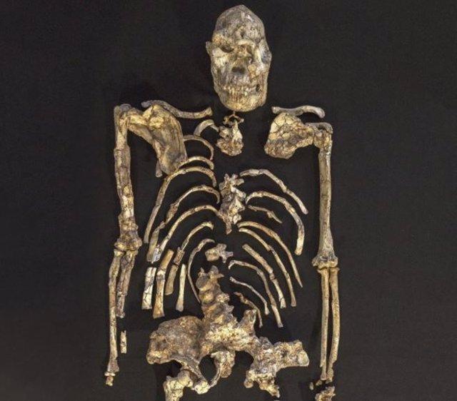 El esqueleto de Little Foot fue descubierto en la década de 1990 en una cueva en Sudáfrica y es el esqueleto antiguo más intacto de cualquier antepasado humano.