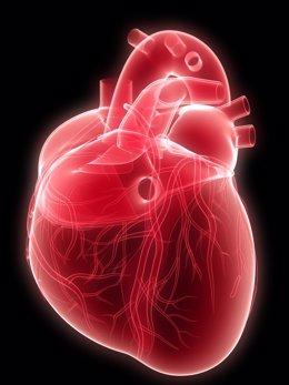 Archivo - Salud cardiovascular