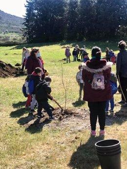 El Consorcio MásMedio de la Diputación de Cáceres fomenta la recuperación y la repoblación del olmo común en la provincia de Cáceres