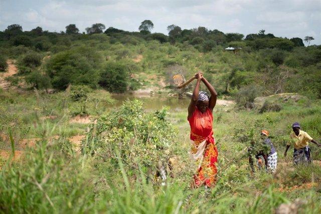 Archivo - Método de regeneración natural en Kenia.
