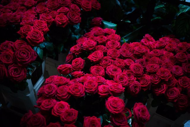 Archivo - Arxiu - Roses de Sant Jordi.