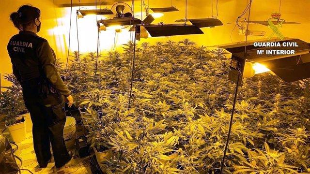 Plantación de marihuana encontrada en Pobladura de Pelayo García (León)