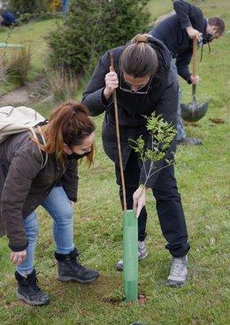 Voluntarias plantas uno de entre más de 400 árboles.
