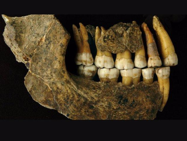 Archivo - Mandíbula neandertal