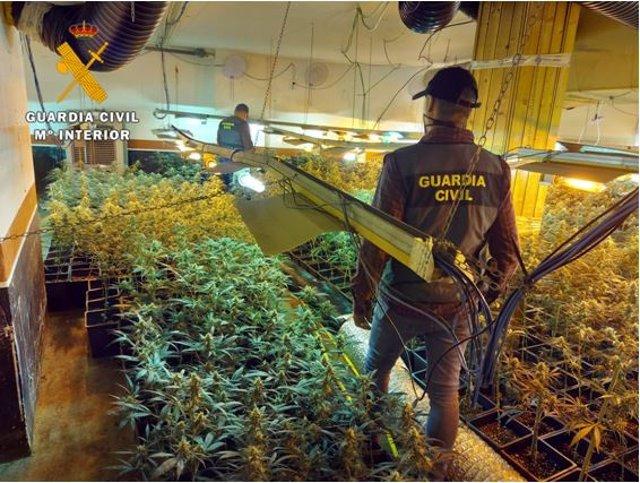 Plantas de marihuana en en interior de la vivienda de Traspinedo.