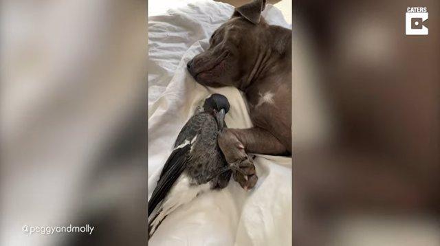 Un perro y una urraca se cogen de las patas mientras se acurrucan