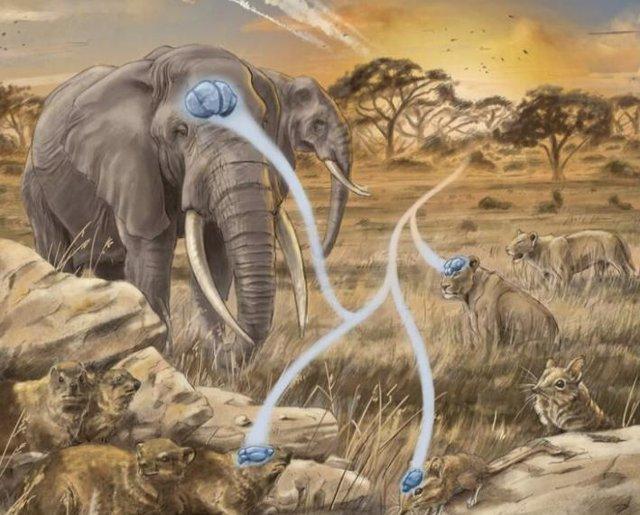 Una interpretación del tamaño del cerebro en mamíferos de varios tamaños muestra variaciones y similitudes a pesar de los niveles de inteligencia.