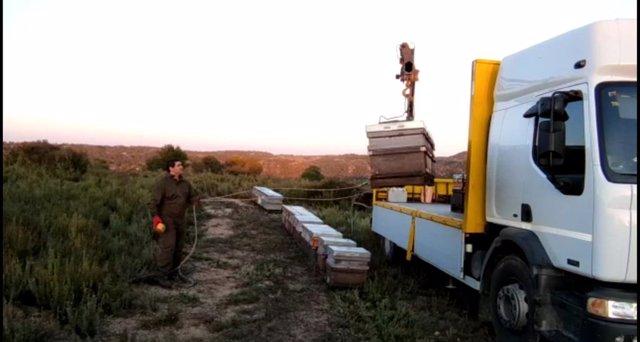 """La cosecha de miel de romero en Guadalajara dará unos 50.000 kilos en la provincia y será """"muy buena"""""""