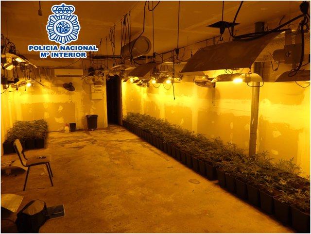Imatge del garatge de Cornellà de Llobregat on van desmantellar 385 plantes de marihuana.