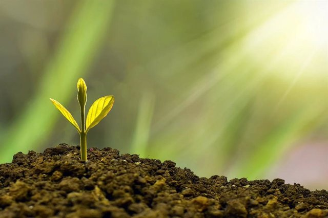 Archivo - Imagen de recurso de un cultivo sostenible.