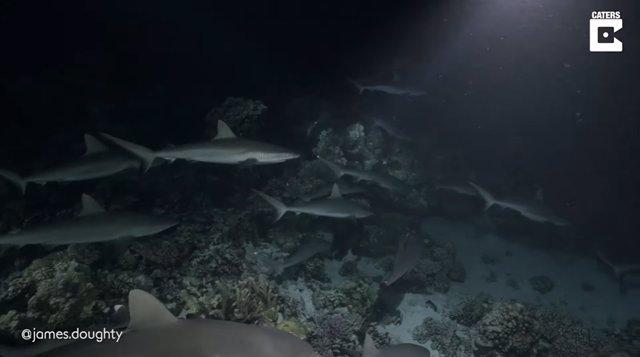Un fotógrafo captura imágenes nocturnas de tiburones cazando en grupo en la Polinesia Francesa
