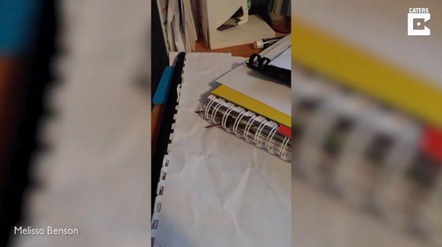 Una enorme araña cazadora se cuela en la encuadernación de un cuaderno