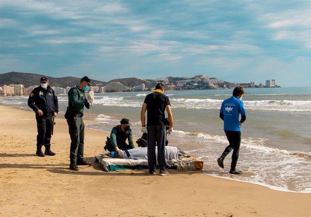 Atenció veterinària a un dofí rescatat en la costa de Cullera (València)