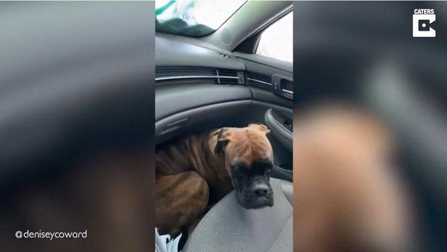 La reacción de este perro a los cepillos del túnel de lavado enternece a Internet