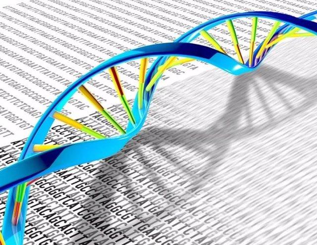 Archivo - El ADN, que tiene una estructura de doble hélice, puede tener muchas mutaciones y variaciones genéticas.