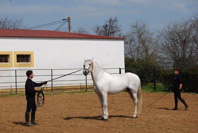 Un caballo en el Censyra.