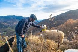 Arxiu - Foto d'un pastor amb una ovella.