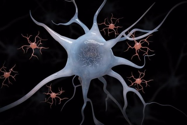 Archivo - Microglia y neuronas.