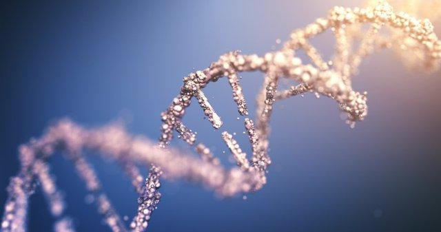 Archivo - ADN